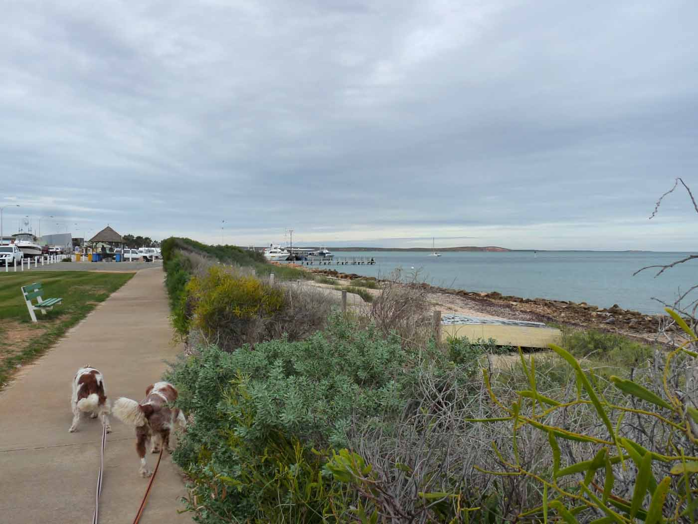 Denham Australia  city photos gallery : Denham Seaside Tourist Village, Western Australia | An adventure ...