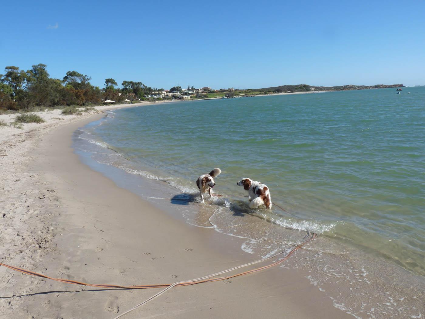 Kalbarri Dog Friendly Caravan Parks