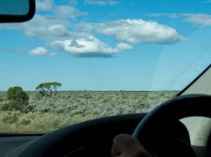 Jilah Rockhole Campground Eyre Highway Western Australia An Adventure Around Oz With Dogs